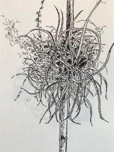 Sketch Claire Ryle