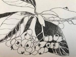 Sketch Claire Ryle Garrison