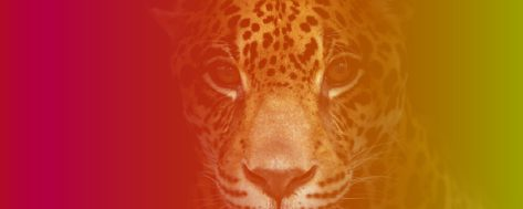 012 – MA in The Jaguar Path: The Way of Modern Mysticism